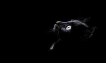 Gato (Cuento de Alfredo Medrano)